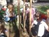 Sajenje sadnih dreves pred šolo